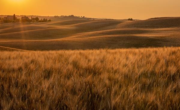 Golden Brown by Kim Walton