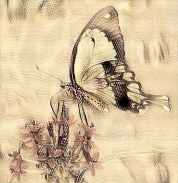 Butterfly Art by sweetpea62