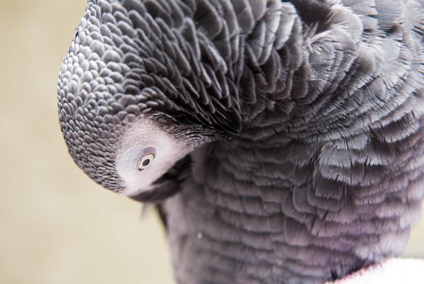 Fibonacci Parrot by col.campbell