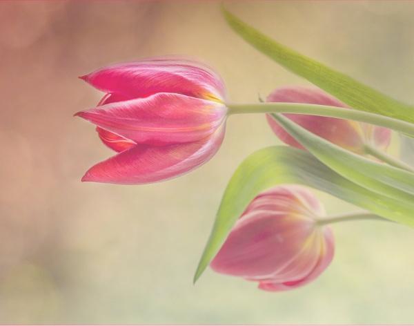 Pretty in Pink by Irishkate