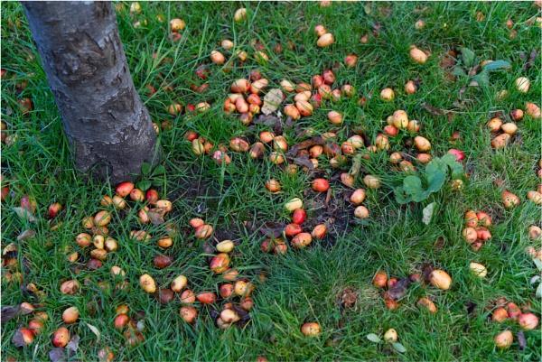 A reminder of Autumn by notsuigeneris