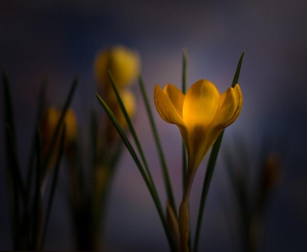 Springtime. by 2479