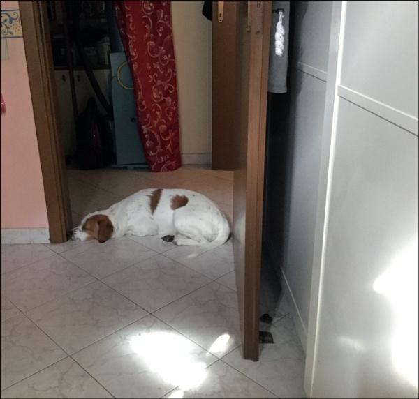 guarding the doorway by laura1