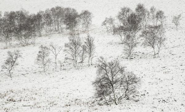 Winter Stencil by Trevhas