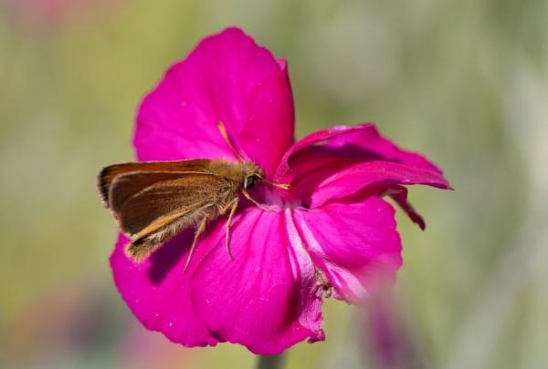 Moth by Karuma1970