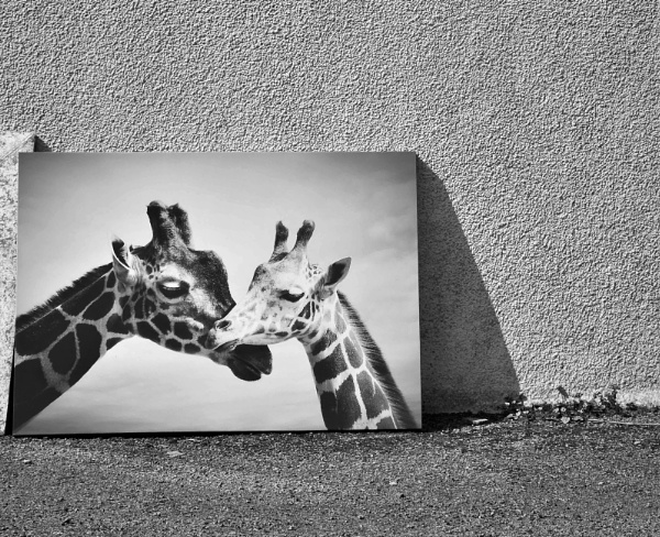 Two Giraffes by Madoldie