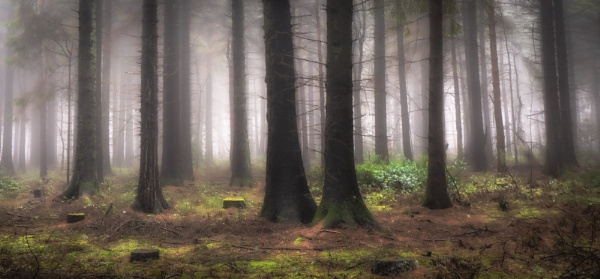 Forest Floor by Legend147
