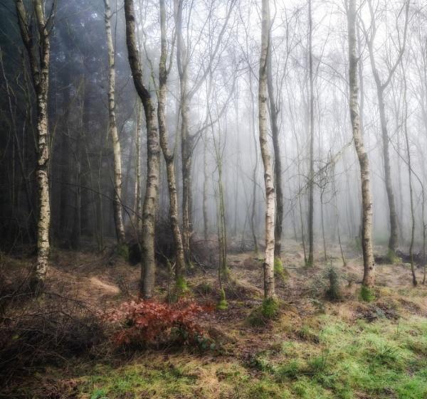 Winter Woodland by Legend147