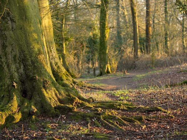 woodland by alfpics