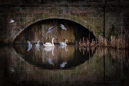 Wildlife Below Wedgwood Bridge