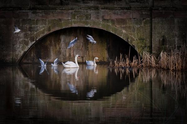 Wildlife Below Wedgwood Bridge by NoelBennettPhotography