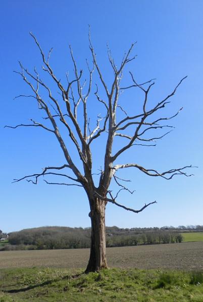 Skeletal Tree by TribuneXL