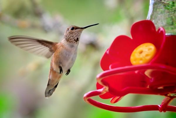 Hummingbird by DPW