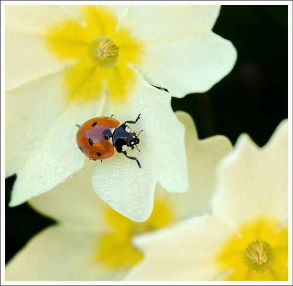 Ladybird. by bricurtis