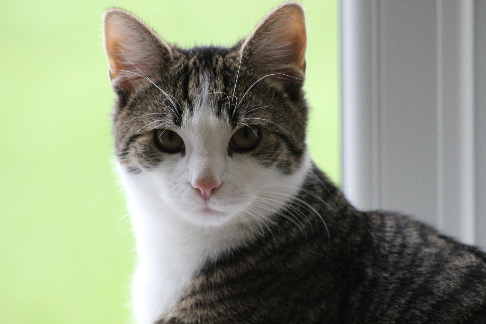 Amadeus practicing his hard stare!