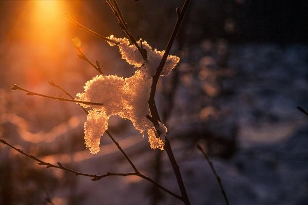 Sunny by Leikon