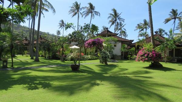 Bali Palm Shadows by TheURL