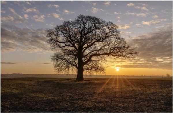 Harlestone sunrise by Carlos9