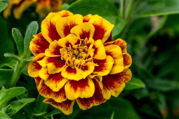 flower by madbob