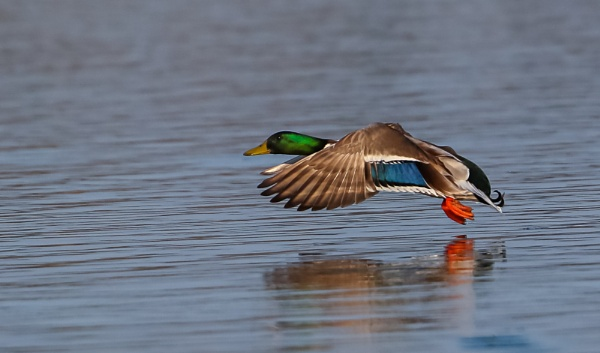Low level fly by by michaelo