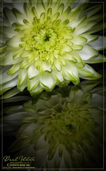 Orton Flower by Paul_Iddon