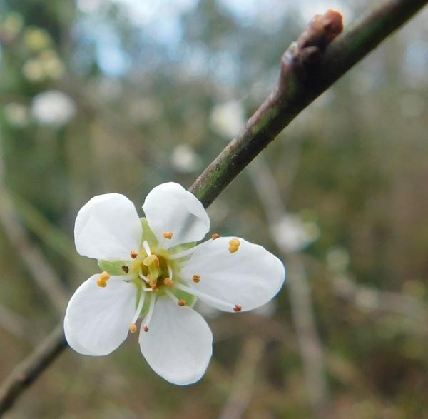 Bud & Blossom by SUE118