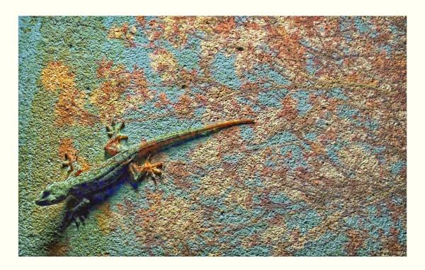 Lizard on the wall by StevenBest