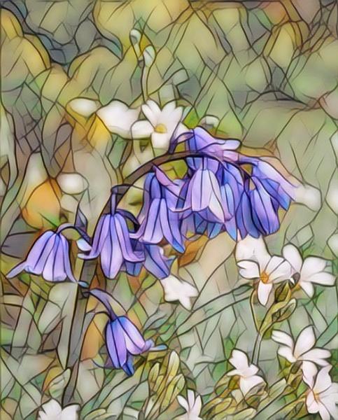 Blue Bells by sweetpea62