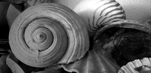Seashelling it... by Chinga