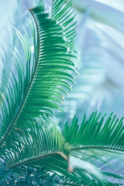Green Branch by manicam