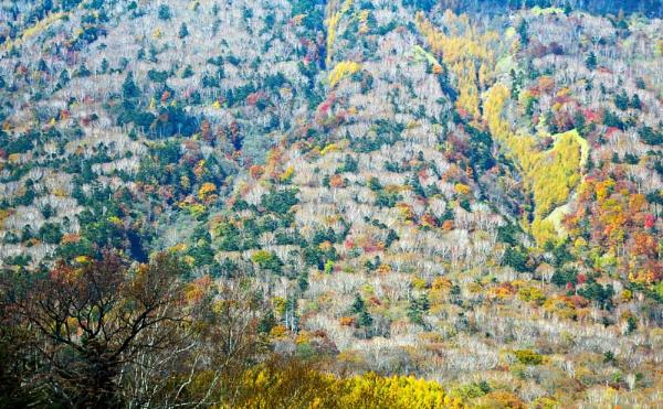 Autumn on the Mt. Nantai by MAK54