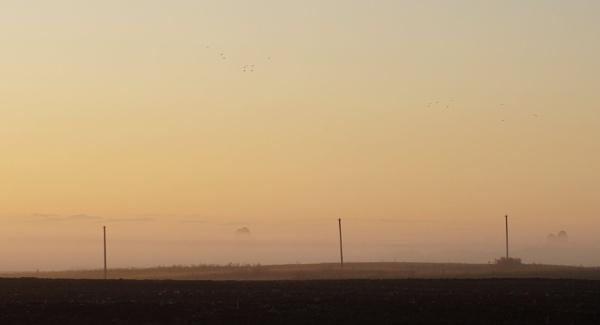 Early morning birds by SauliusR
