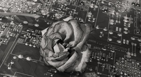 sacrificed on the altar of tech by bornstupix2