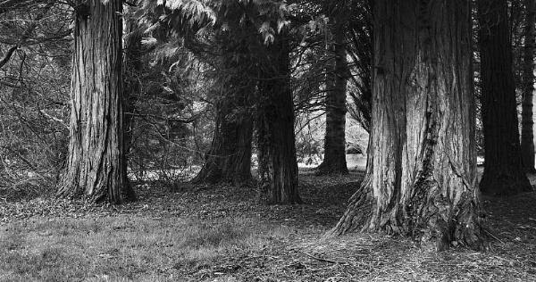 Trees in Westonbirt Arboretum -Westonbirt  Gloucestershire by VincentChristopher