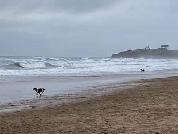 waves at Seaton Sluice Northumberland 1st Jan 2021 by topcatj