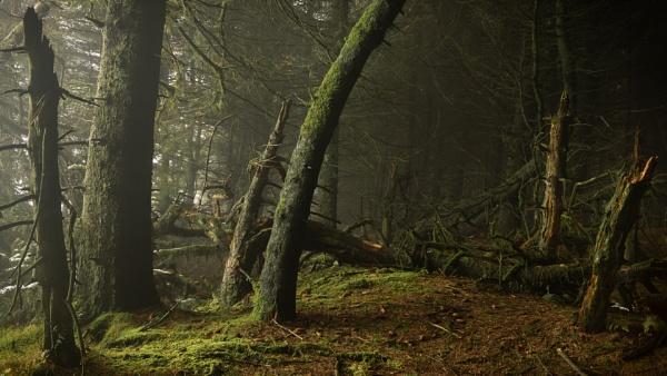 Woodland Decay by JelFish