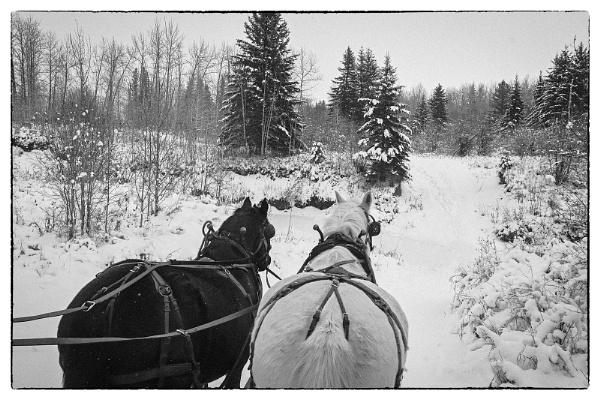 Winter Travel in Alberta by MalcolmM