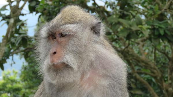 Fidgety Monkey by TheURL
