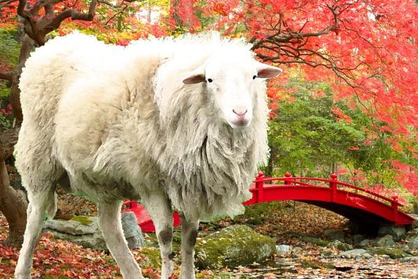 The Big Sheep by judee