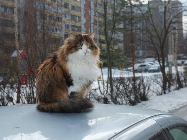 Cat by Alex_r