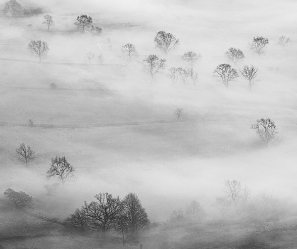 Trees and Mist by martin.w