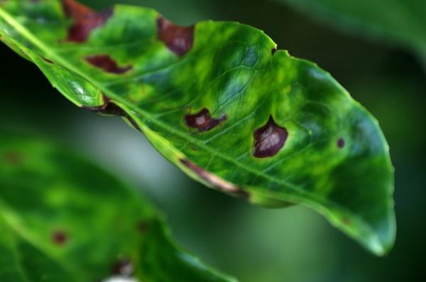 Vivid Greens 2 by Kako