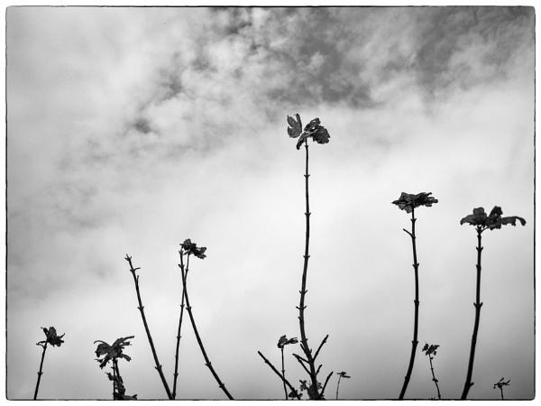 Dawn Chorus by woolybill1