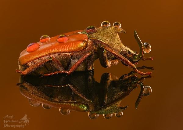 Beetlejuice by Angi_Wallace