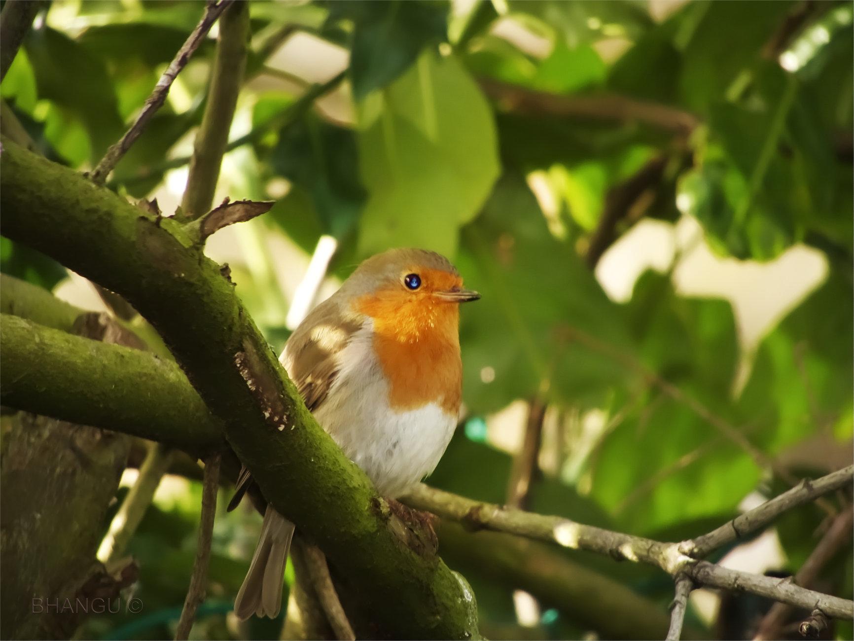 Robin Wood!!