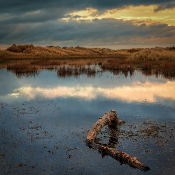 Dublin Everglades by markst33