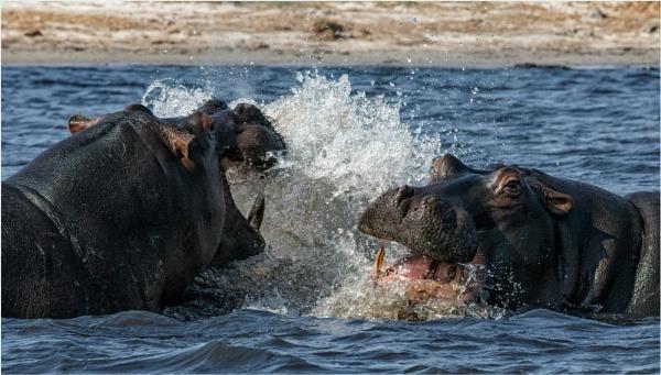 Hippo scrap by mjparmy