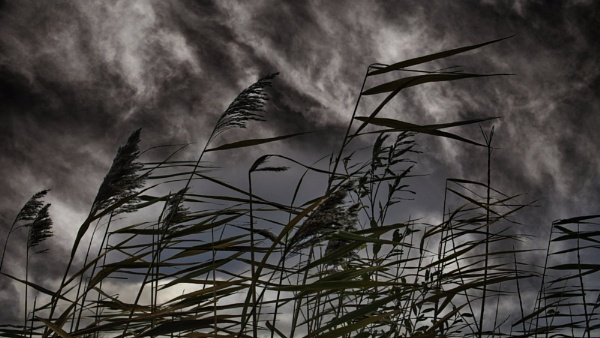 Whispering Grass by RLF