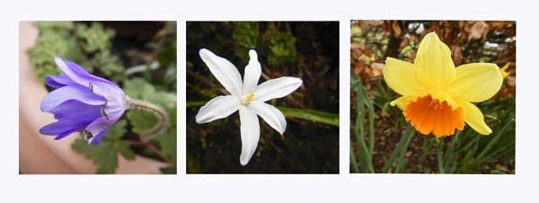 Spring Triptych by Irishkate