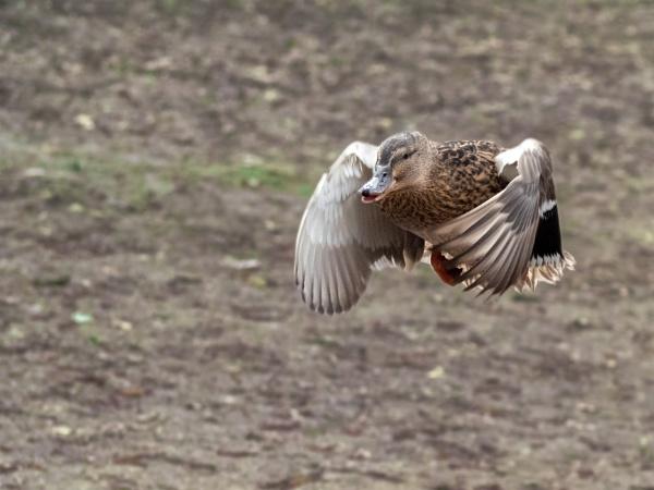 In flight by jimobee